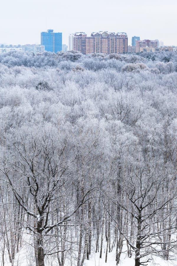 Camere sull'orizzonte e sulla vista del legno in neve fotografia stock libera da diritti