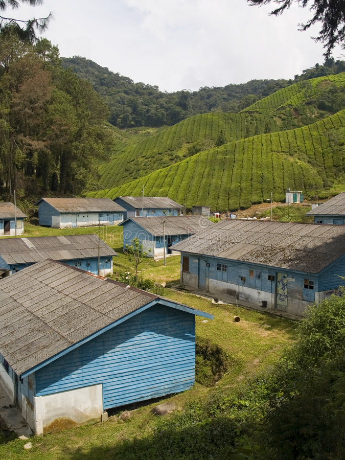 cameron högland malaysia royaltyfri foto