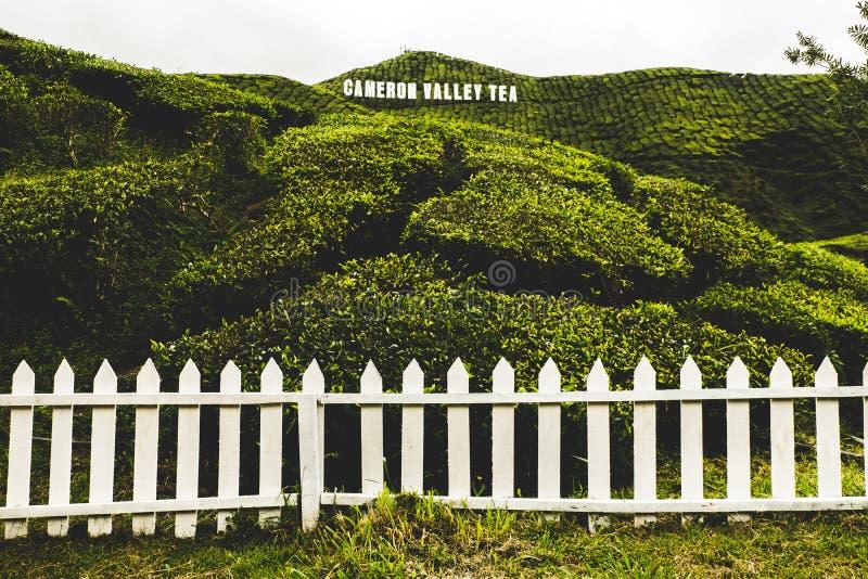 Cameron Highland admitido Cameron Valley Tea Plantation imágenes de archivo libres de regalías
