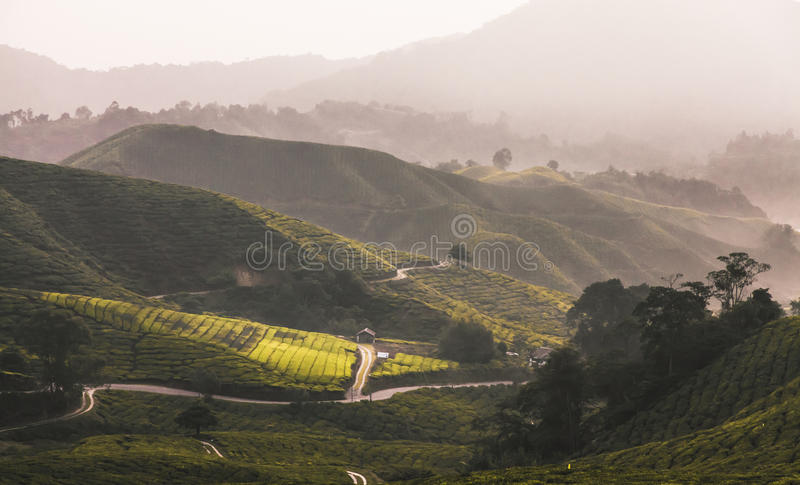 Cameron highland. BOH Plantations was founded in 1929 by J.A. Russel, a British businessman during the British colonial era in Malaya. He was optimistic of the royalty free stock photo