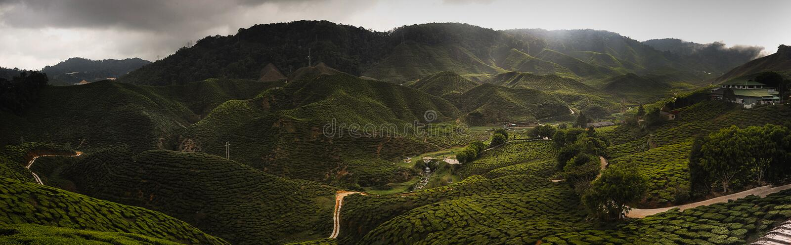 Cameron Highland royalty free stock images