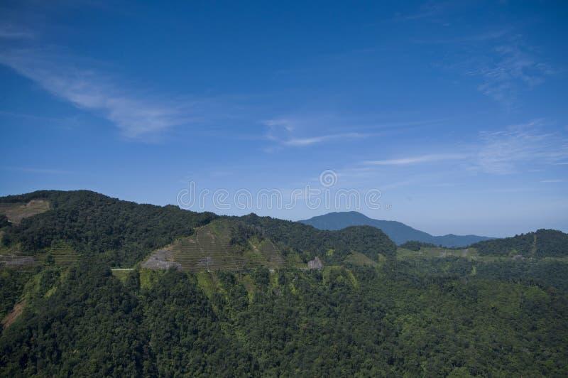 Cameron Highland Sg Palas panoramasikt royaltyfri foto