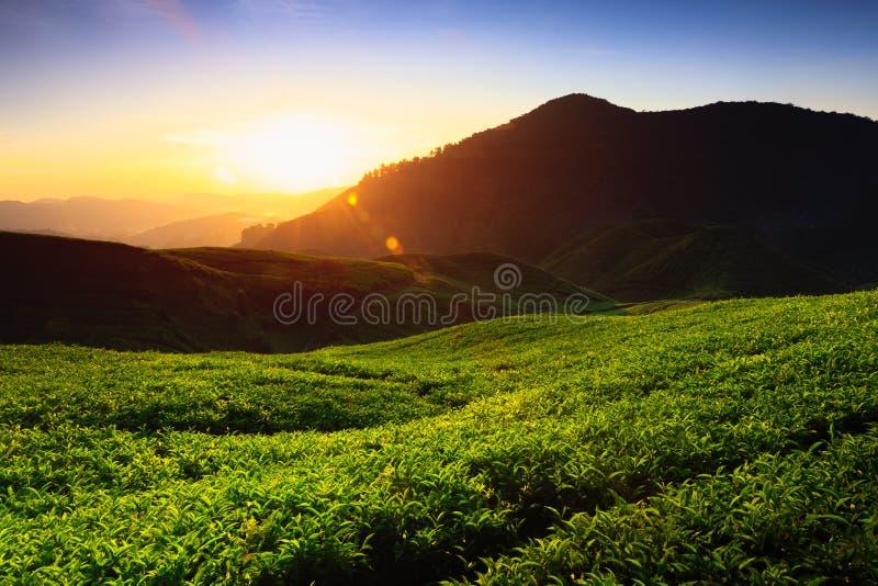 Cameron Highlands royaltyfria foton