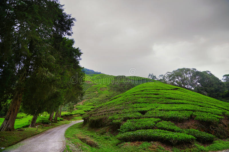 Download Cameron Highlands image stock. Image du côte, d0, zone - 45358839