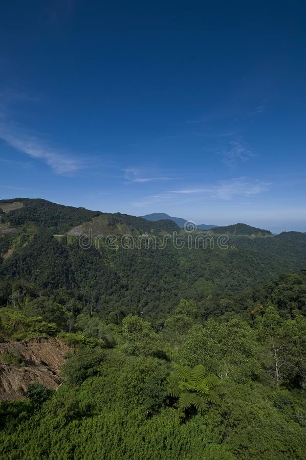 Cameron Highlands At Mountain images stock
