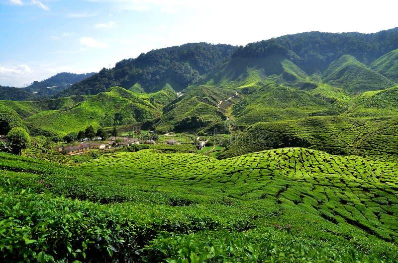 Cameron Highlands, Pahang, Maleisië stock fotografie