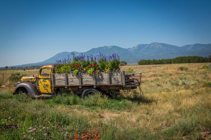 Camión viejo en un prado florido foto de archivo