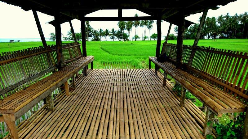 Camiguin稻领域有巨大看法 库存照片