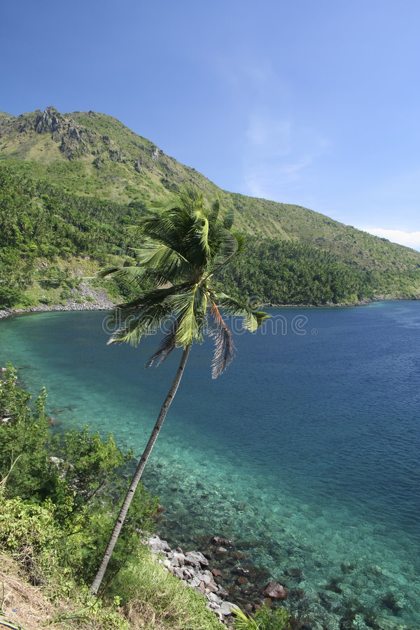 Camiguin island palm tree philippines stock image