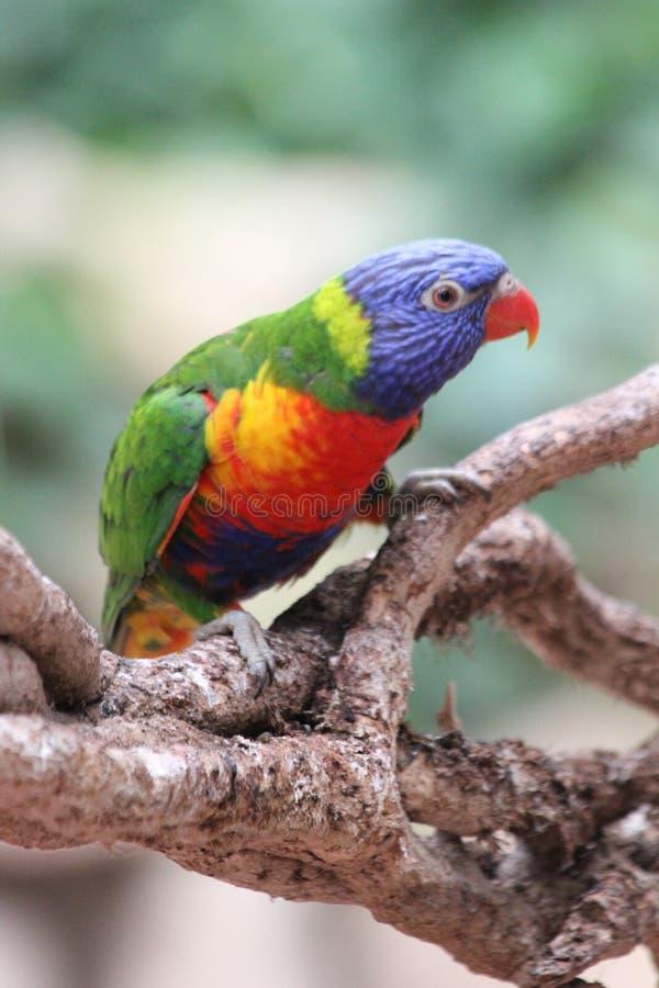 Camille Morenos - Oiseau Multicolore Free Public Domain Cc0 Image