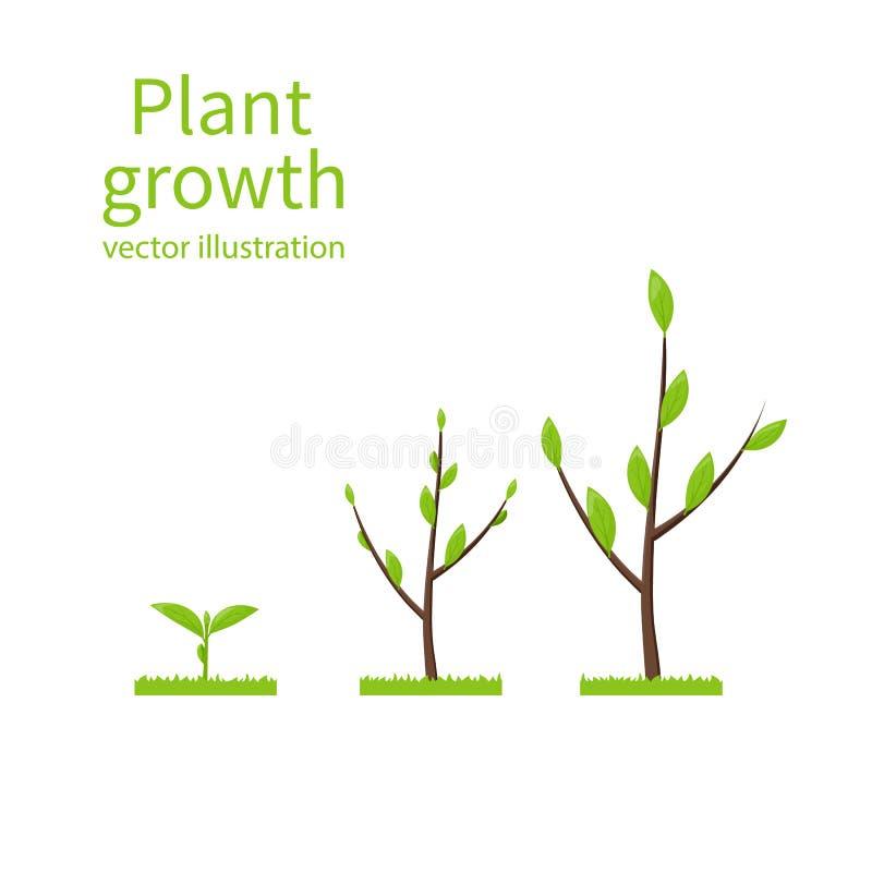 Camina el árbol del crecimiento libre illustration