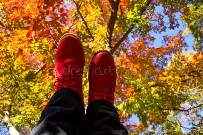 Caminando el otoño fotos de archivo