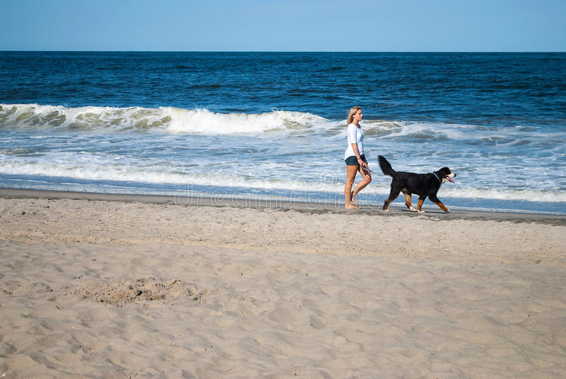 Caminando el perro fotos de archivo