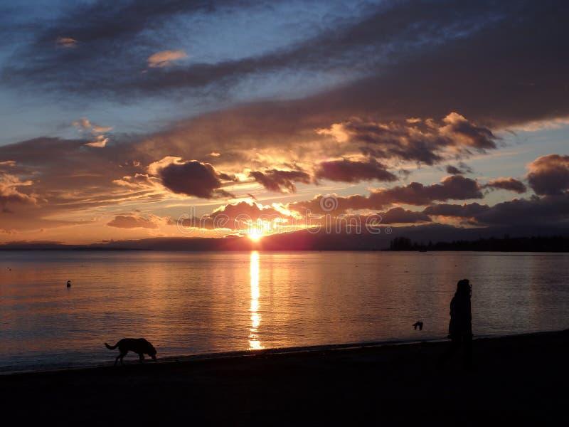 Caminando el perro antes de oscuridad fotos de archivo