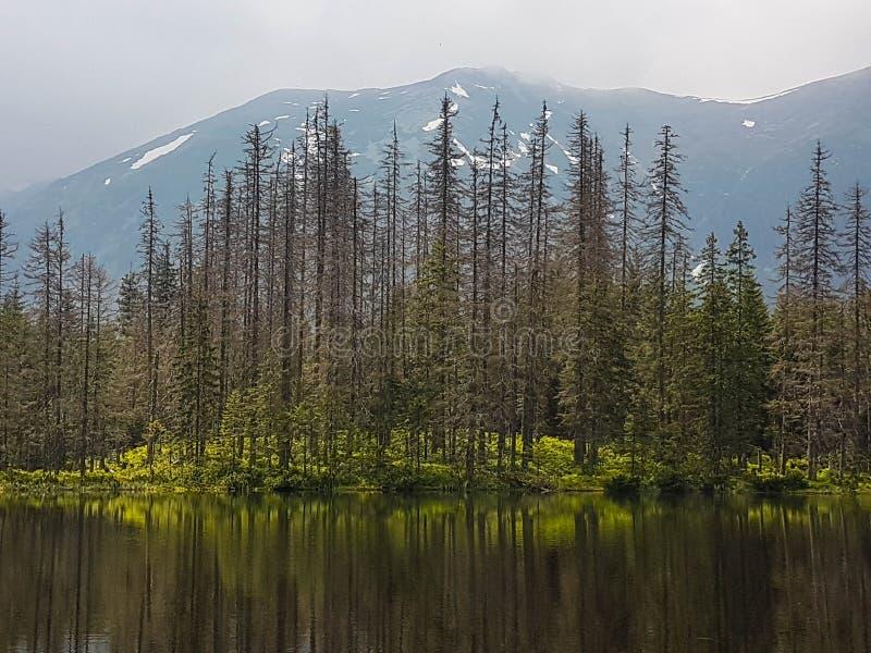 Caminando en el parque nacional de Tatra, Polonia, en mayo Opinión panorámica hermosa sobre las montañas rocosas y la charca del  fotos de archivo