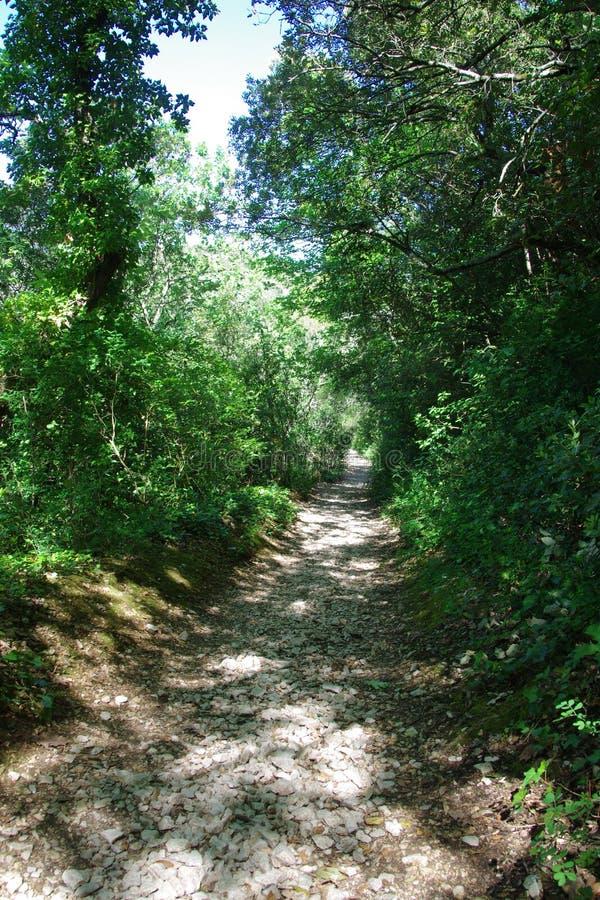 Caminando la trayectoria en el medio de un bosque verde, foto de archivo