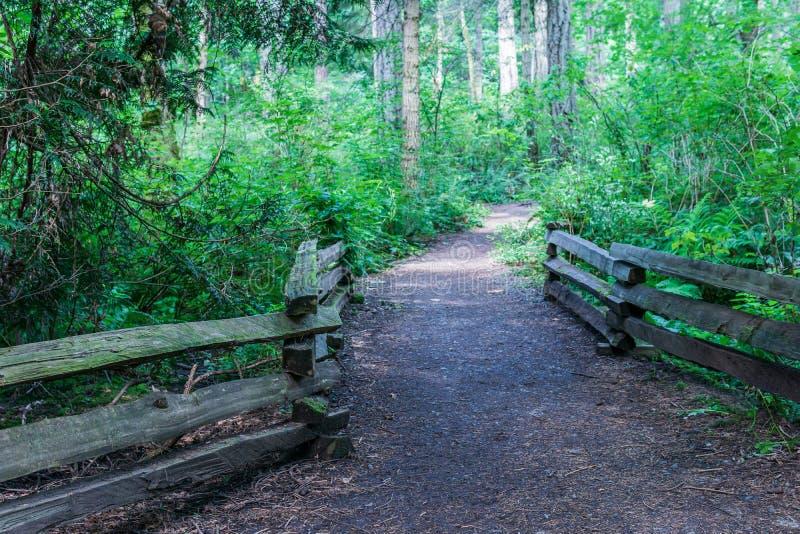caminando la trayectoria o el rastro en la más forrest rodeado por los arbustos y los árboles verdes en la isla de Vancouver imágenes de archivo libres de regalías