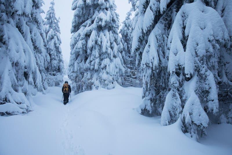 Caminante de Backcountry que empuja a través de la niebla en una cuesta nevosa Esquí que viaja en condiciones del invierno crudo  imagen de archivo libre de regalías