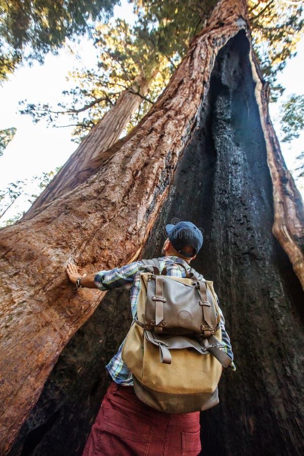 Caminante en parque nacional de secoya en California, los E.E.U.U. imágenes de archivo libres de regalías
