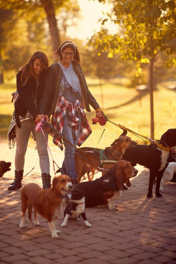 Caminante feliz del perro de las muchachas con los perros que gozan en caminar divertido imágenes de archivo libres de regalías