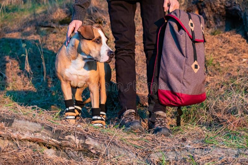 Caminante y perro en caminar los zapatos para colocarse de lado a lado en el bosque imagenes de archivo