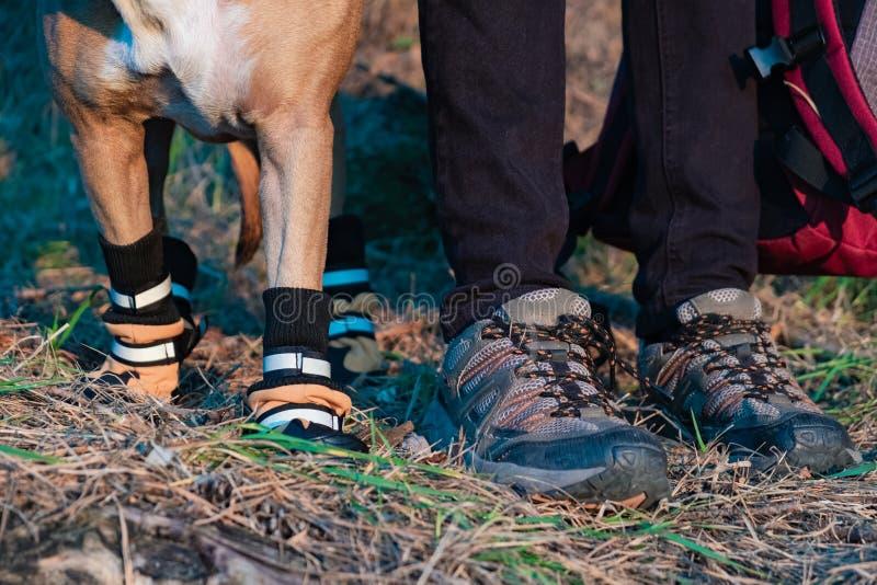 Caminante y perro en caminar los zapatos para colocarse de lado a lado en el bosque fotos de archivo libres de regalías