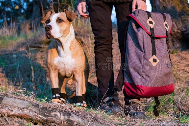 Caminante y perro en caminar los zapatos para colocarse de lado a lado en el bosque fotos de archivo