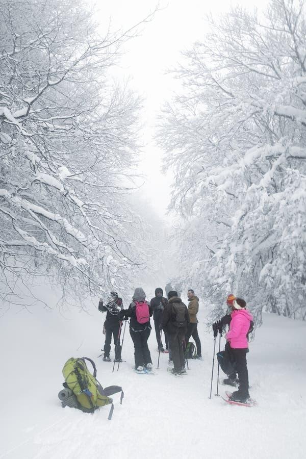 Caminantes del grupo que caminan en el rastro nevado y de niebla fotografía de archivo