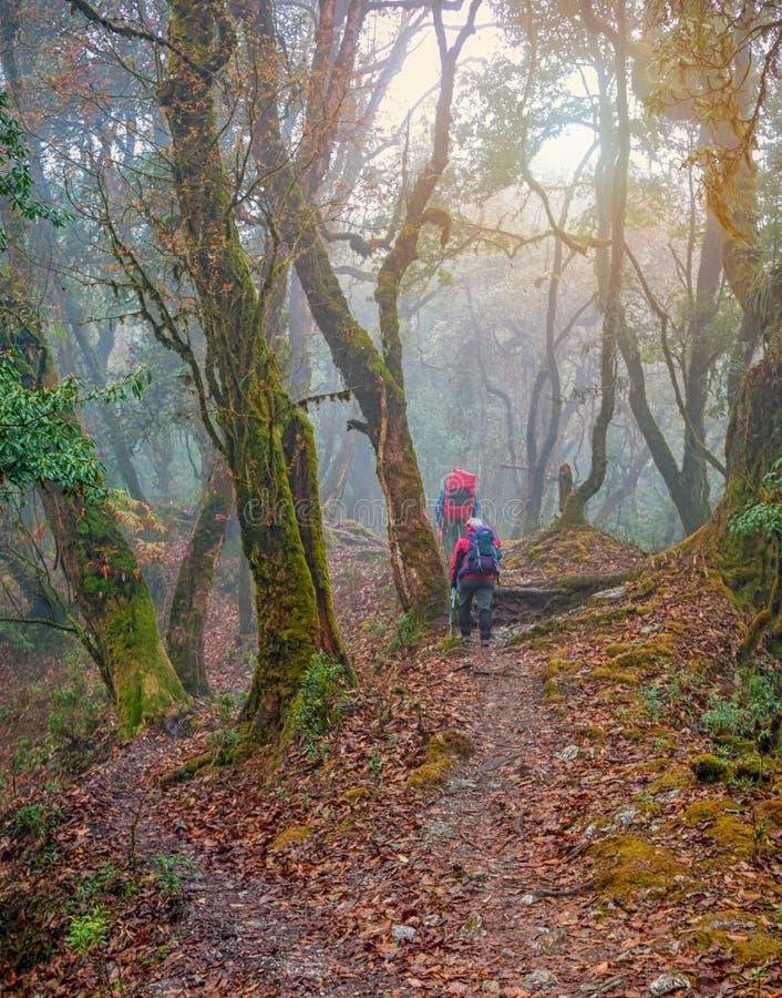Caminantes en las selvas Himalayan, Nepal imagen de archivo