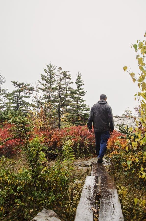 Caminar el parque nacional del Acadia en caída fotos de archivo libres de regalías