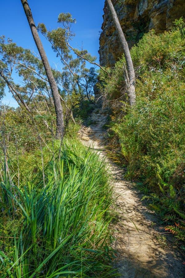Caminar el paseo del acantilado del Henrio del príncipe, montañas azules, Australia 6 imagen de archivo