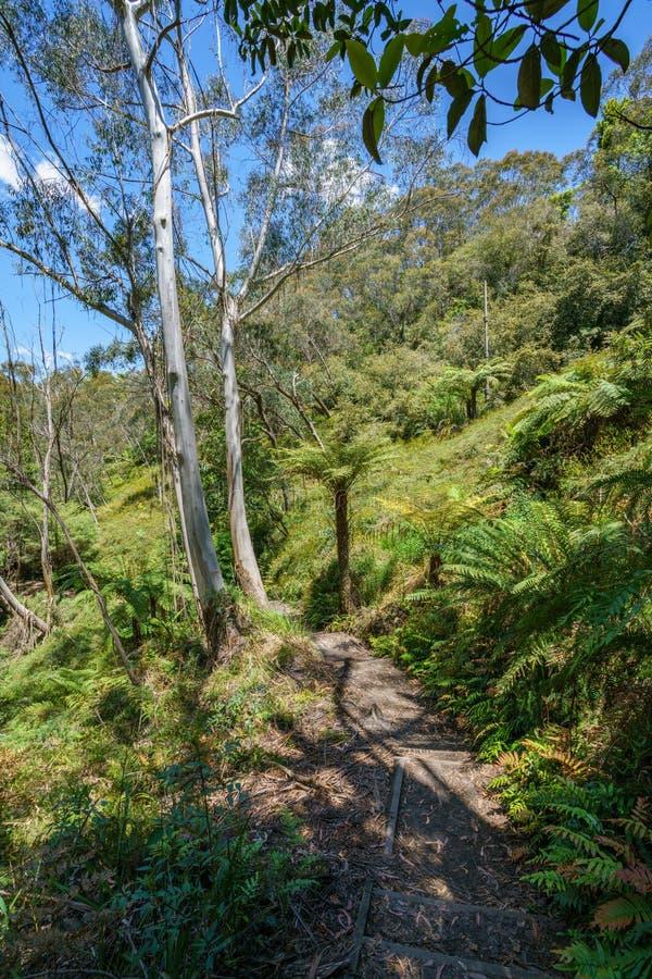 Caminar el paseo del acantilado del Henrio del príncipe, montañas azules, Australia 50 imágenes de archivo libres de regalías