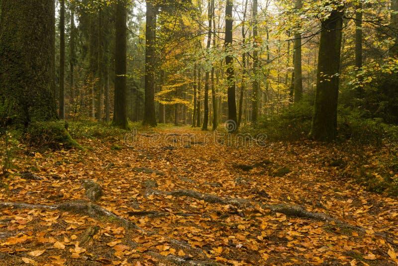 Caminar el rastro GR5 en el Benelux imagenes de archivo