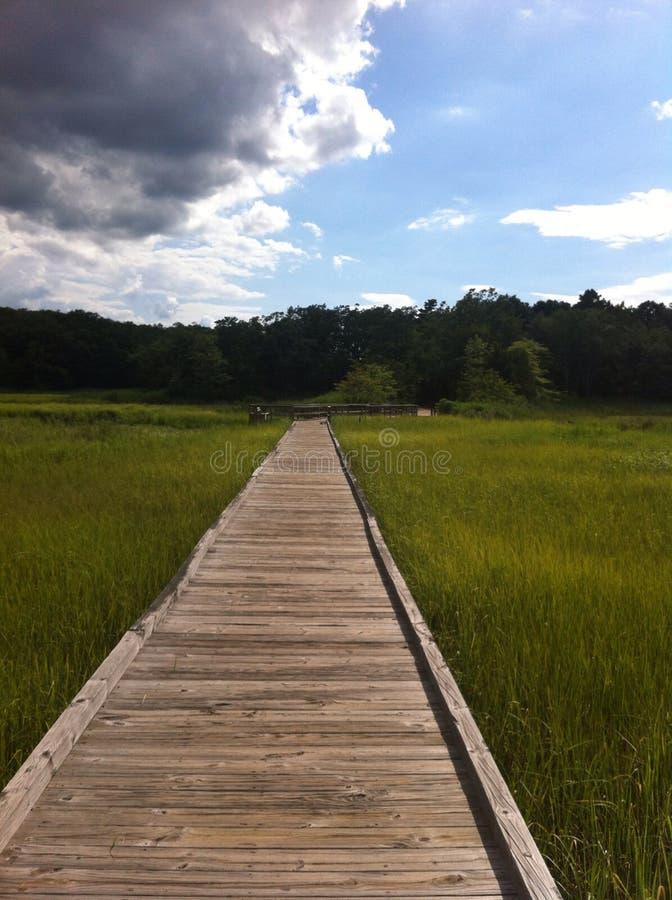 Caminar a la familia del verano de maderas foto de archivo libre de regalías