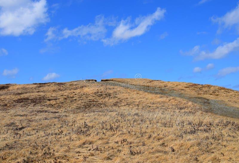 Caminar la trayectoria a través de un área herbosa seca y de un cielo azul imagen de archivo