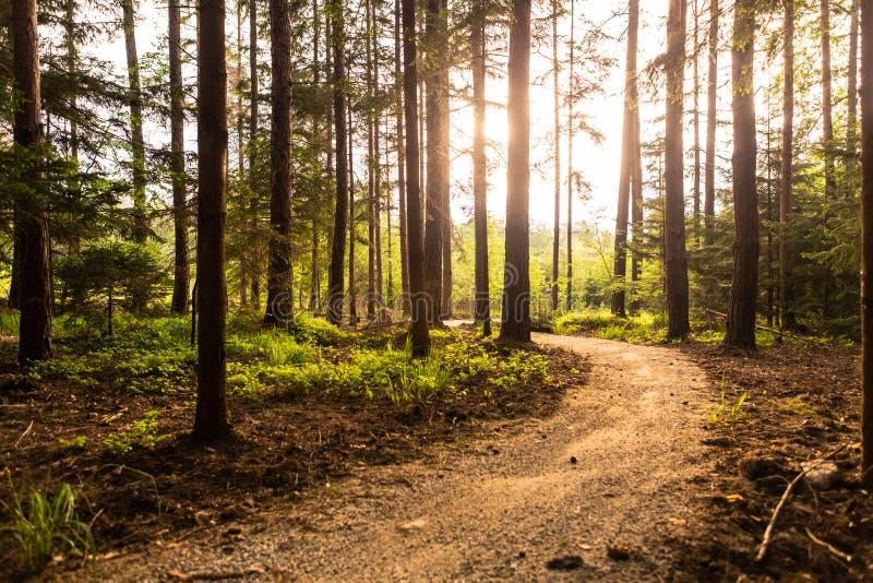 Caminar la trayectoria y la puesta del sol en bosque beadutiful fotografía de archivo libre de regalías