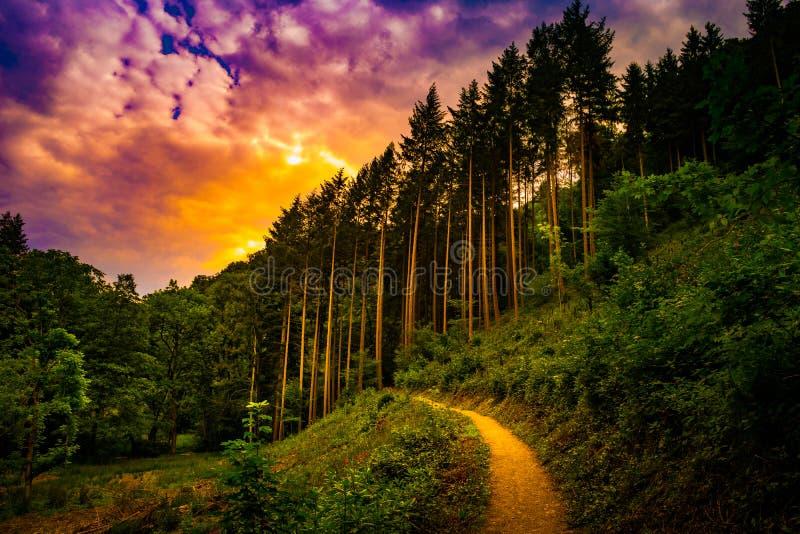 Caminar la trayectoria y la puesta del sol en la opinión panorámica de maderas hermosas, paisaje inspirado del verano en bosque fotografía de archivo libre de regalías