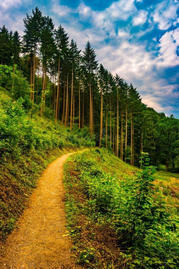 Caminar la trayectoria y la puesta del sol en la opinión panorámica de maderas hermosas, paisaje inspirado del verano en bosque fotografía de archivo
