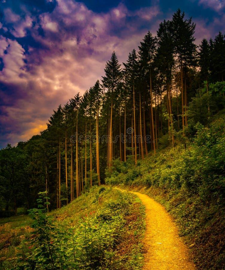 Caminar la trayectoria y la puesta del sol en la opinión panorámica de maderas hermosas, paisaje inspirado del verano en bosque imagen de archivo