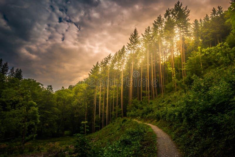 Caminar la trayectoria y la puesta del sol en la opinión panorámica de maderas hermosas, paisaje inspirado del verano en bosque foto de archivo libre de regalías