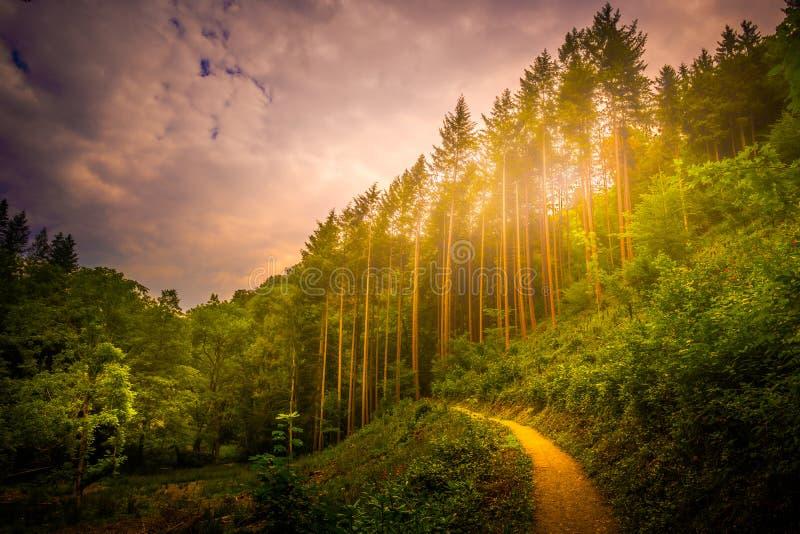 Caminar la trayectoria y la puesta del sol en la opinión panorámica de maderas hermosas, paisaje inspirado del verano en bosque foto de archivo
