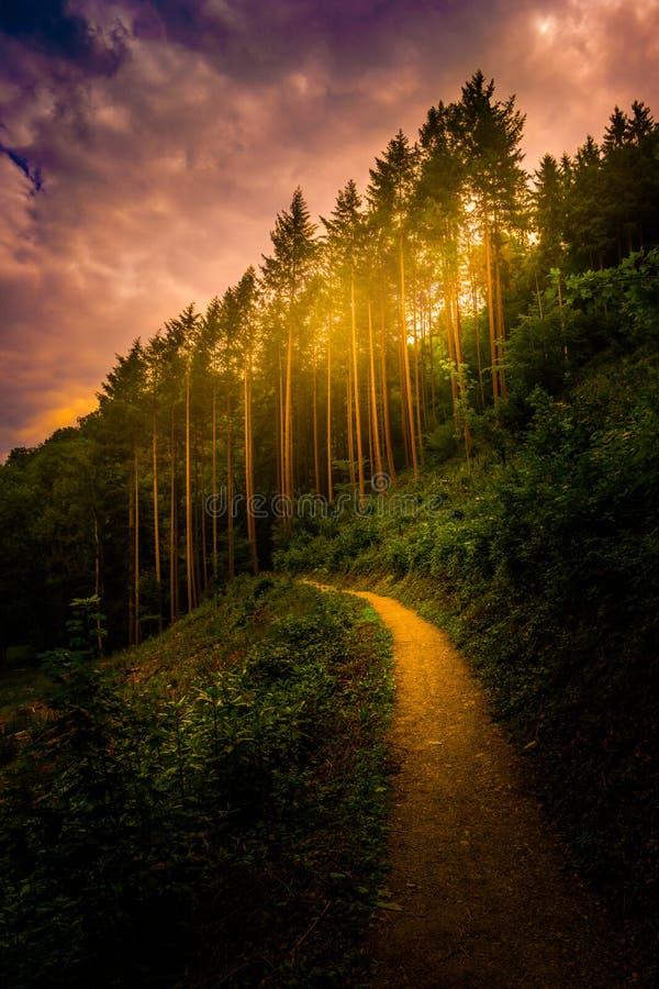 Caminar la trayectoria y la puesta del sol en la opinión panorámica de maderas hermosas, paisaje inspirado del verano en bosque imágenes de archivo libres de regalías