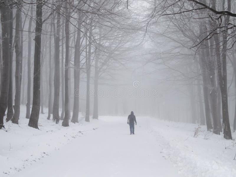 Caminata brumosa del invierno fotografía de archivo libre de regalías