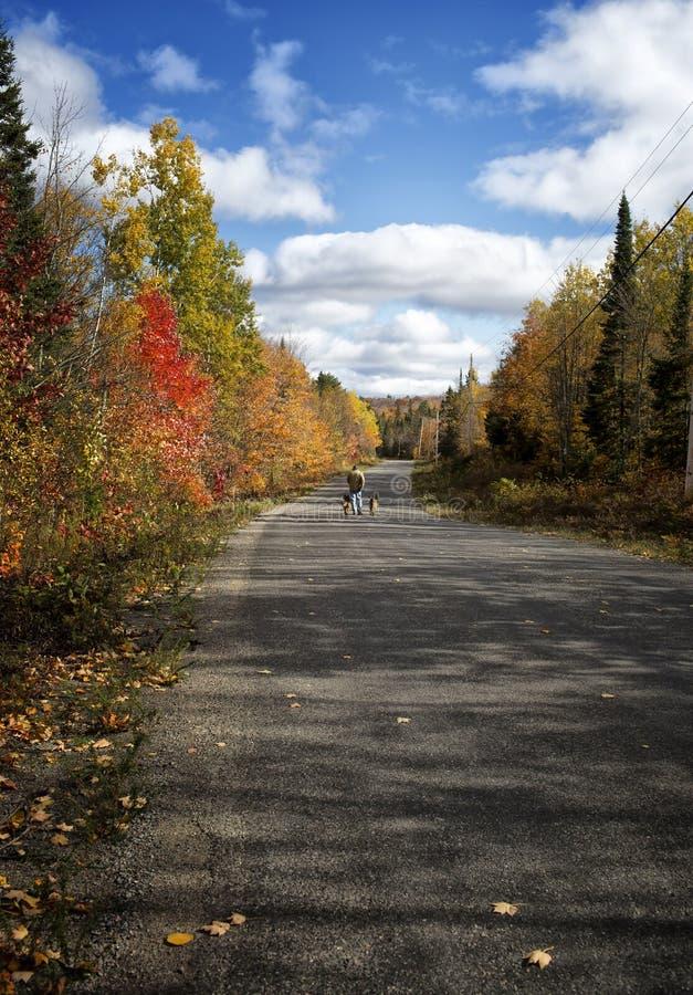 Caminata de la caída con los perros fotos de archivo