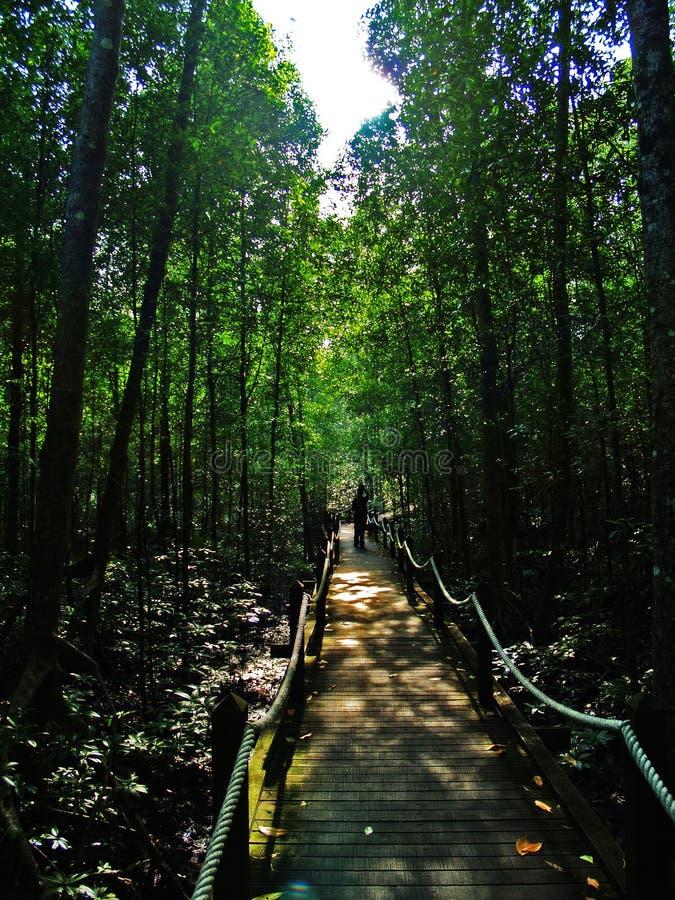 Caminata de la selva fotos de archivo libres de regalías