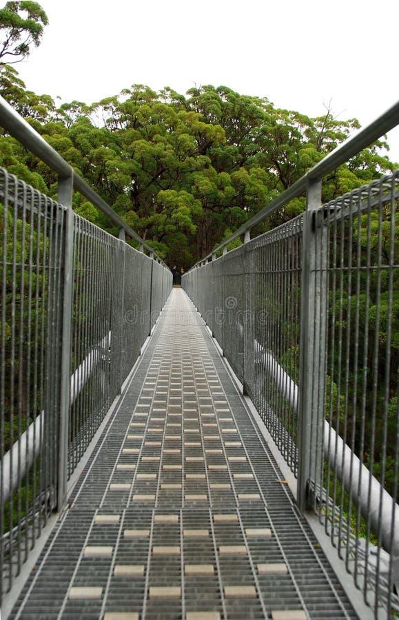 Caminata de la tapa del árbol imágenes de archivo libres de regalías