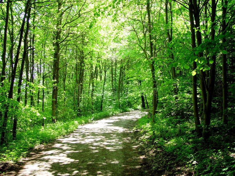 Caminata del bosque imagen de archivo