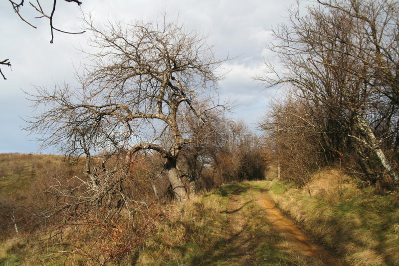 Caminata del camino del otoño foto de archivo