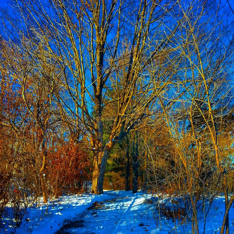 Caminata del invierno fotos de archivo libres de regalías