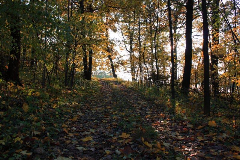 Caminata en el Forrest fotografía de archivo libre de regalías